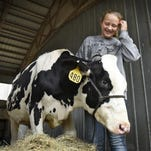 Maggie Molitor works with her heifer Biscuit at her family farm Aug. 18 near Rockville. Molitor will be one representative of Stearns County at the Minnesota State Fair after earning her spot in county fair competition. Molitor is the youngest of eight sisters.
