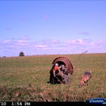 Turkeys are gobbling and the youth turkey hunt is off to a great start.