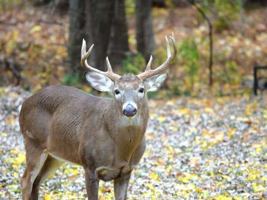032416-vr-deer.jpg