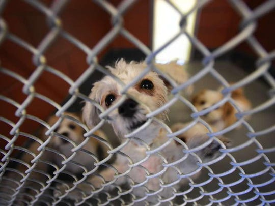 A lawsuit filed in California claims an Iowa animal rescue is actually a puppy mill that supplies pet stores with puppies it claims are rescues to circumvent California law.