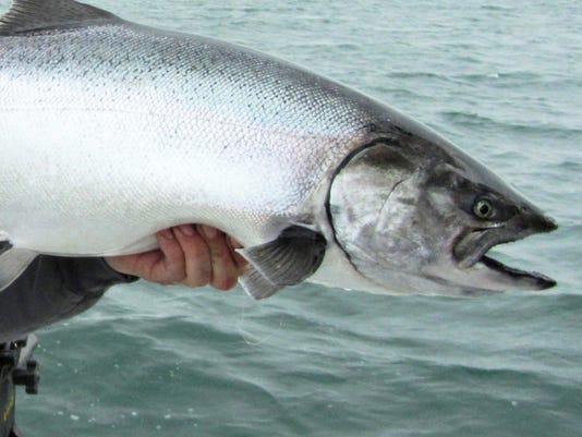 636441288886017106-salmon-80512-chromer-es.jpg