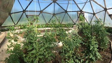 Health By Plants, a new Waushara County natural farm will produce goods for the Oshkosh Saturday Farmer's Market this summer. Pictured is a geodesic dome where the farm owners produce vegetables, herbs and other goods.