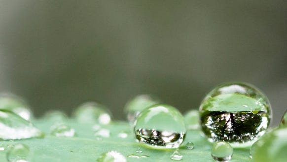 Water droplet on a leaf on May 29, 2015.