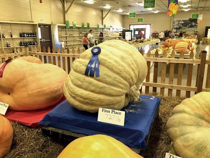 Big pumpkin not freaky at all.