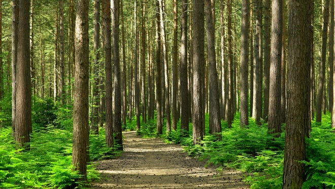 File photo of wooded area.