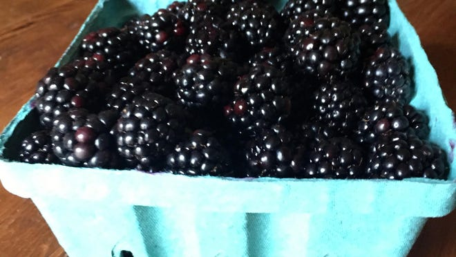 It can take a few pricks to pick blackberries.
