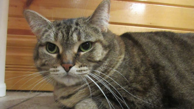 Tera is the Animal Control Pet of the Week