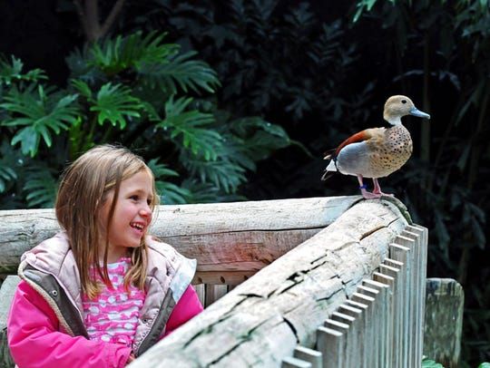 Families can warm up inside the aviary during their