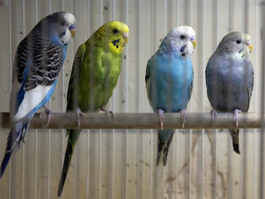 Fins and Feathers, a nearly 30 year-old pet store in