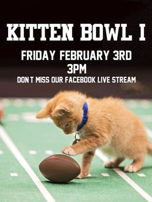 The Sioux Falls Area Humane Society is hosting its first Kitten Bowl Friday, Feb. 3. Kittens and older cats will be available for adoption after the event.