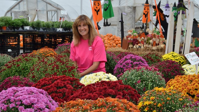 Patty Huffman of Huffman Farms & Greenhouses, 296 S. Blue Bell Road in Vineland, is selling mums at various stages of bloom at the farm. Mums are available for $1 and up.