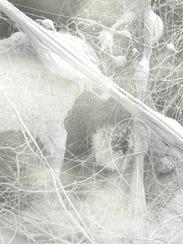 "Carla Ciuffo, ""Anemone,"" 2017, polished one-inch acrylic"