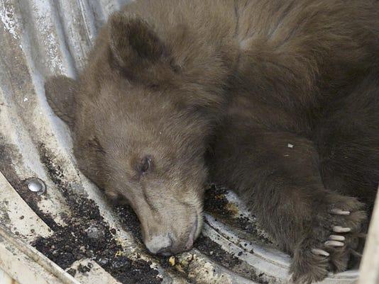 Black Bear Escape