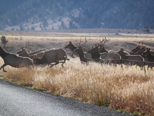 -fence elk jumping.jpg_20121219.jpg
