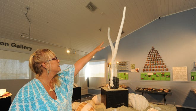 Catherine Wiggins points out a shell from a giant tube worm, part of the Designs from the Deep: The Architecture of the Shell exhibit at the Channel Islands Maritime Museum in Oxnard. The exhibit consists of shells from Wiggins' collection.