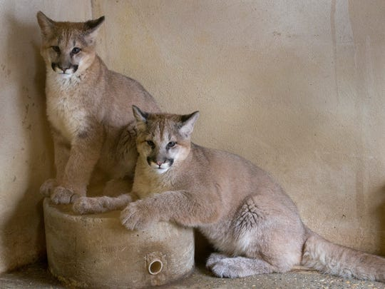 Popcorn Park Zoo has new arrivals, Shiloh and Tocho,