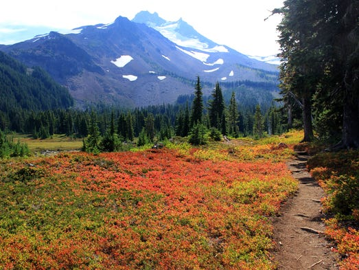 Top five wildflower hikes in the Central Cascades: Jefferson Park.