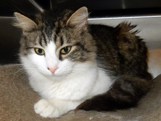 Lady GaGa is a beautiful, 1½-year-old, spayed female