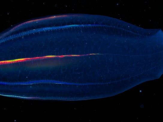 Arctic Zooplankton