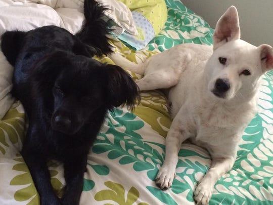 Sierra, left, with Rood's other dog, Gandhi