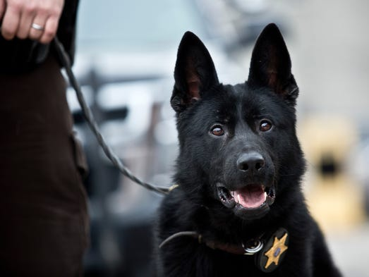 Faust, a new police dog, pictured Wednesday, Dec. 30,