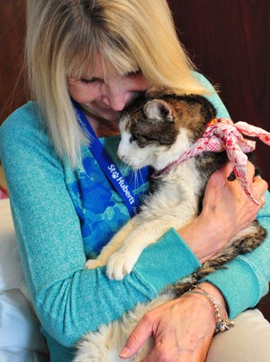 Eight-year volunteer Patty Millin of Madison snuggles Mao, official office cat of St. Hubert's. St. Hubert's Cat Society held an Afternoon Tea fundraiser on Sunday.