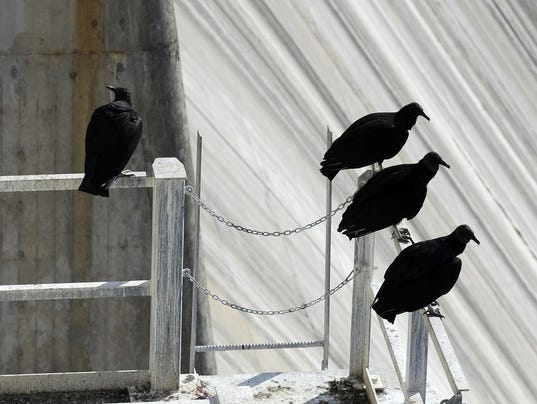 how to get rid of black vultures
