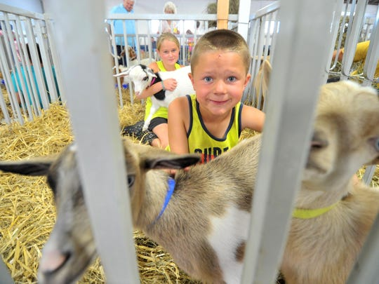 Goats being prepared for judging during the 2014 Wisconsin Valley Fair at Marathon Park in Wausau.