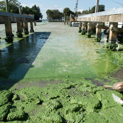 Algae is seen in the St. Lucie River at Outboards Only