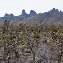 A lush expanse of Joshua trees in a valley below the Castle Peaks would be protected if President Barack Obama uses his executive authority under the Antiquities Act to give the area national monument status.