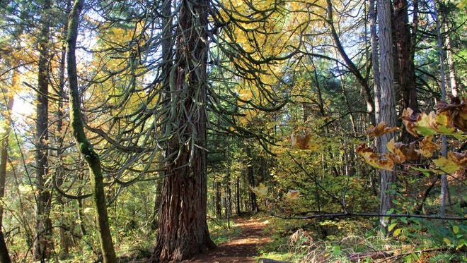 The trails at Mount Pisgah Arboretum wind through forest and along the Coast Fork Willamette River in Eugene.