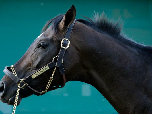 Kentucky Derby winner Always Dreaming stands outside his barn at Pimlico Race Course in Baltimore, Monday, May 15, 2017. The Preakness Stakes horse race is scheduled to take place May 20. (AP Photo/Patrick Semansky)