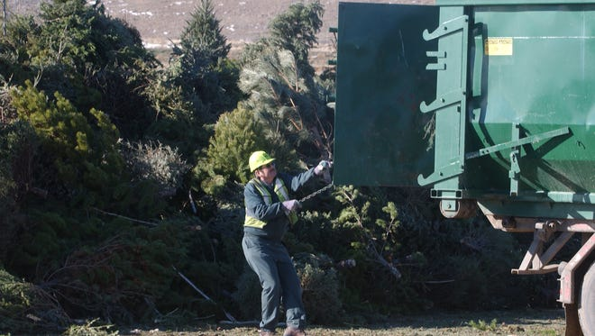 This file photo shows Mike Eilert a roll-off driver for Waste Management haulers, opens the back door of his truck loaded with Christmas trees at the Larimer County Landfill Monday  Jan. 7, 2007, at the recycling site for the disposed tree.
