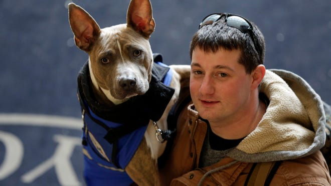 Pit bull assistance dog Zen has allowed former U.S. Marine Joe Bonfiglio, 24, who was diagnosed with post-traumatic stress disorder, to get back to everyday activities.