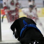 Top dog: Mudbugs clinch playoff spot with another shutout