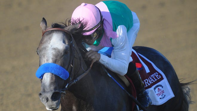 Arrogate with Jockey Mike Smith up, win the Travers Stakes horse race at the Saratoga Race Course in Saratoga Springs, N.Y., Saturday, Aug. 27, 2016. (Steve Jacobs /The Post-Star via AP)
