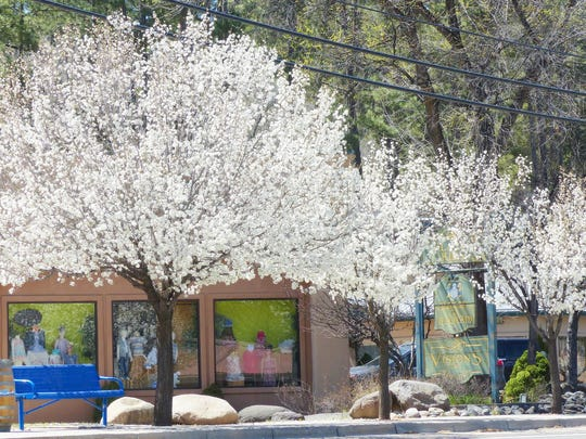 The idea of planting trees in midtown began with a MainStreet project decades ago, but continued through the efforts of the Ruidoso Parks and Recreation Department.