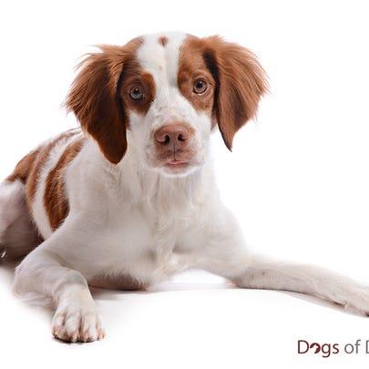 Dog of Denver