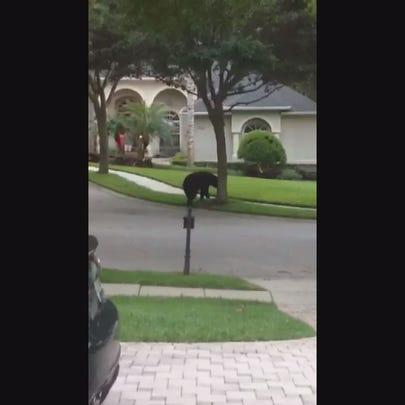 WATCH: Bear roams around Bella Terra