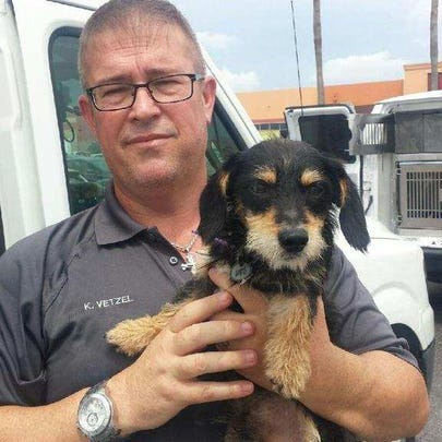 Scooby Doo and another dog were rescued from a hot