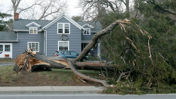 One of the many trees blown down due to the strong winds, this one on Latta Road at Bridgewood Drive in Greece.