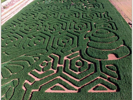 La Union Maze will feature a bee theme this year. The maze and a variety of family-friendly activites will open Saturday at 1101 New Mexico Hwy. 28 in La Union.