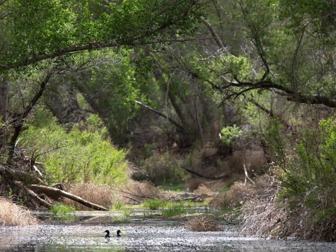Lawsuit targets development near San Pedro River in Arizona