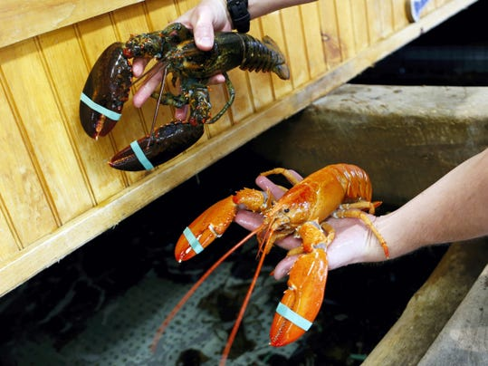 Bill Coppersmith's orange lobster is held next to a regular lobster at the Fishermens Catch restaurant in Raymond, Maine. (AP Photo/Robert F. Bukaty)