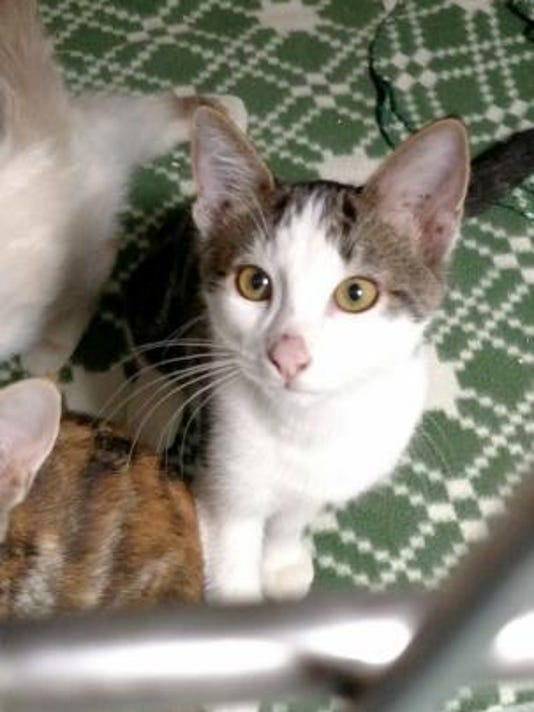 Oct. 1 Pet of the day