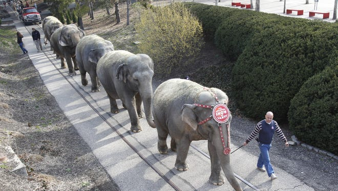 """The Ringling Bros. elephants walk the half-mile through Sawyer Point to U.S. Bank Arena as part of the arrival of """"The Greatest Show On Earth"""" in 2012."""