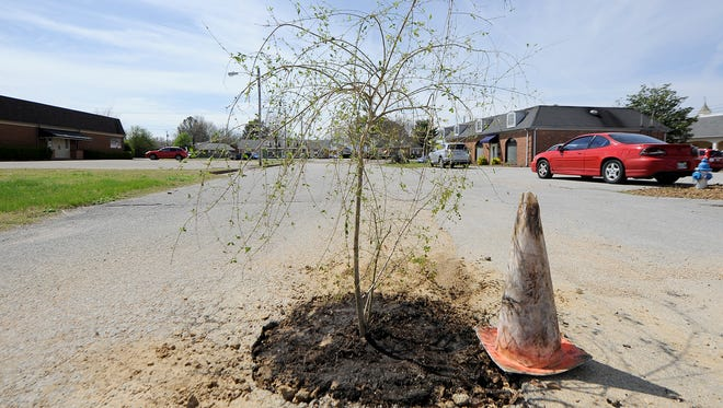 A tree is seen planted in a pothole along Federal Drive in Jackson, Tenn., on Wednesday, March 22, 2017. A tree was spotted in a pothole in Northville recently as well.