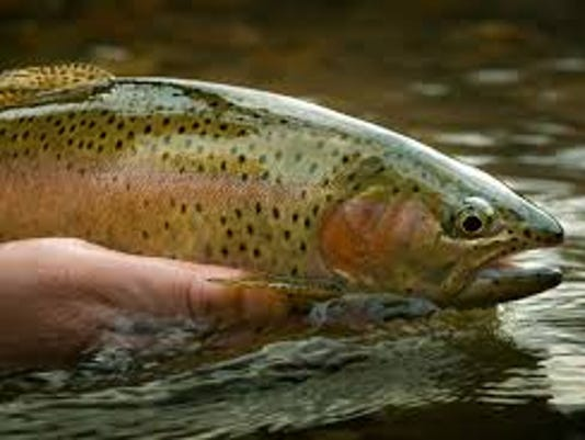 trout in hand.jpg