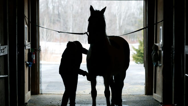 Volunteer Theresa Filo of Fairport brushes Dandy before the arrival of riders with disabilities at Heritage Christian Stables in Webster.