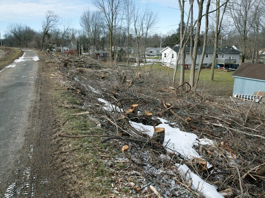 Trees that were cut down along Erie Canal properties in Brockport.